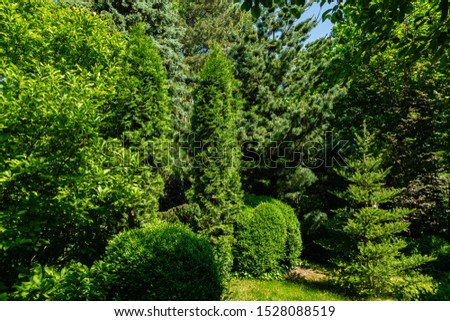 Beautiful spring landscape garden with evergreens. Example use of thuja western, Korean spruce and Japanese pine Glaka in combination with evergreen boxwood shrubs and leafy magnolia Susan. Close-up. #1528088519