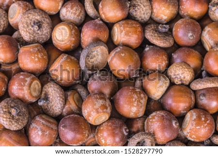 large acorns top view. background with acorns (filling the picture). texture with acorns.