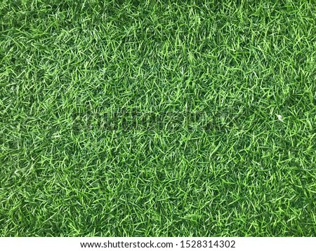 Green grass on picture for refreshing #1528314302