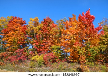 Colorful autumn trees in the park #152848997