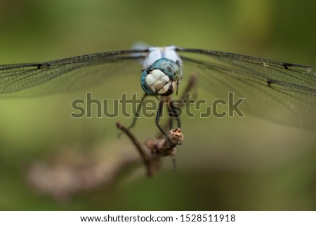 This great blue skimmer tilts its head as it eyes tiny insects flying by. But the position of the mouth and jaws makes it appear to be laughing. Good for a meme.