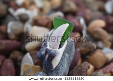 sea side shell and stone craft work... #1528513220