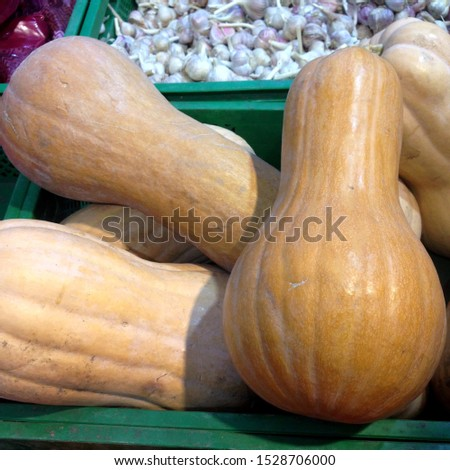 Macro photo pumpkins. Stock photo vegetable orange pumpkins