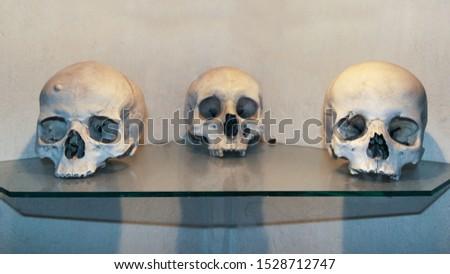 Three human skulls on a glass shelf. Human Anatomy Concept and Halloween. #1528712747