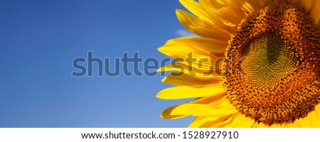 colorful sunflower and blue sky #1528927910