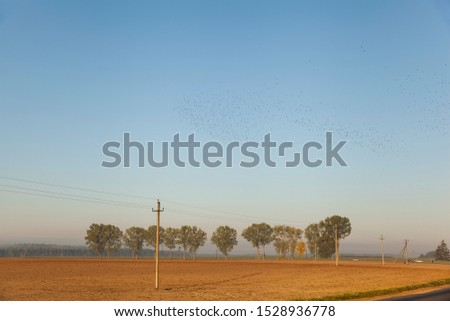 Autumn landscape with a plowed field, electric poles on it against the background of a row of trees along the road and blue sky with a flock of ravens #1528936778