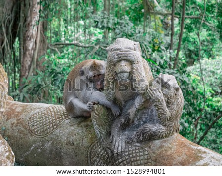 Monkey beside the monkey statue monkey forest #1528994801