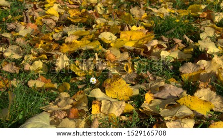 Scene Of Autumn Meadow Covered With Yellow Fallen Leaves #1529165708