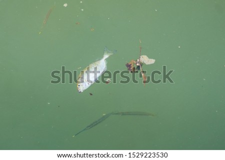 Dead fish float in the sea and garbage #1529223530