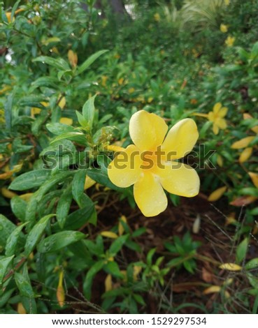 little yellow flowers blooming amidst green leaves  #1529297534