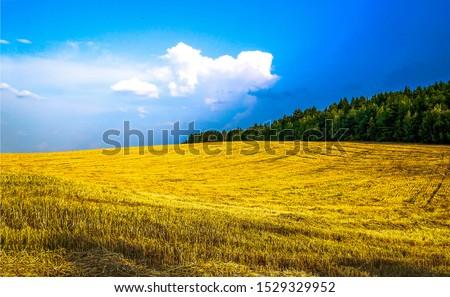 Agriculture farm field landscape. Farm field agriculture scene. Agriculture wheat field farmland. Agriculture field landscape #1529329952