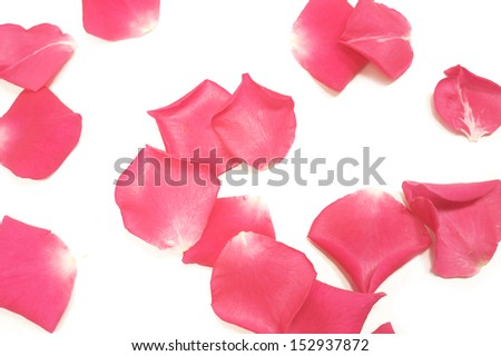 pink rose petals isolated #152937872