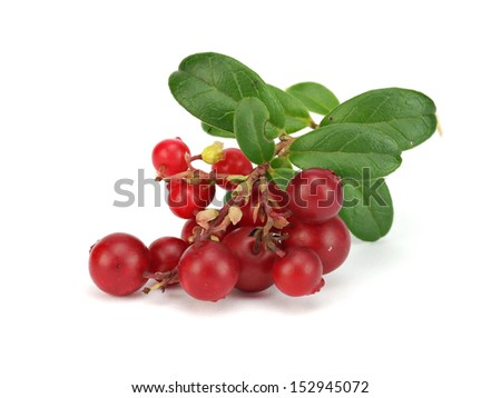 Fresh lingonberries with leaves on a white background #152945072