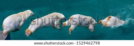 Polar bear, polar bear, predators, bears, spray bears #1529462798