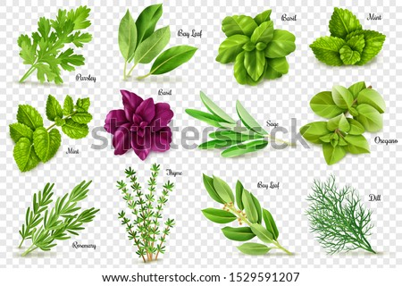 A large set of herbs on a transparent background, isolated objects, popular culinary plants, natural health care, mint and rosemary, basil, thyme, parsley, dill, bay leaf, oregano and sage Royalty-Free Stock Photo #1529591207