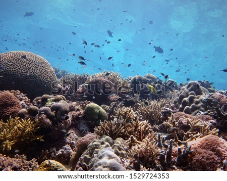 Tubbataha Reefs Natural Park, Philippines - Underwater shot of a tropical coral reef with different species of reef fish #1529724353