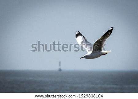 seagull,flying seagull, seagull flying, bird, flying brid #1529808104