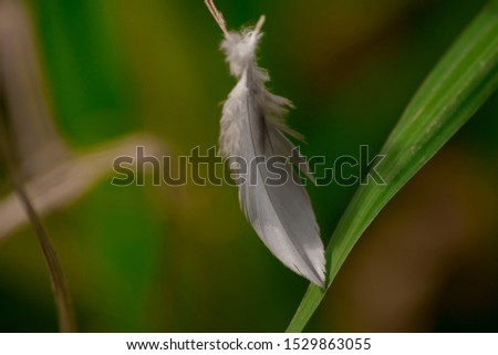 lost feather of some bird #1529863055