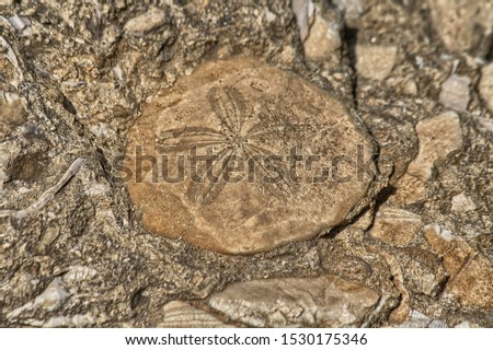 Fossil echinoderms. Geosite area of Duidduru, Sardinia, Italy Royalty-Free Stock Photo #1530175346