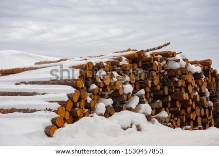 Felled trees under the snow. Raw materials for the woodworking industry. Wood storage in the open air. Timber company. Timber. Roundwood. Round timber. #1530457853