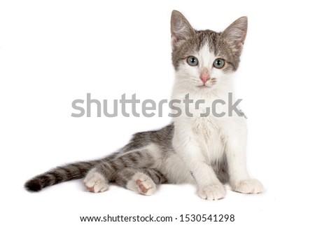 Gray with white kitten on white background #1530541298