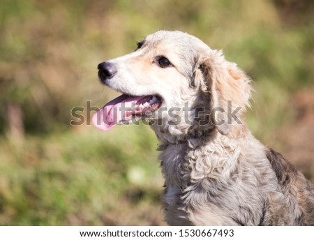 Happy adopted dog on a field #1530667493