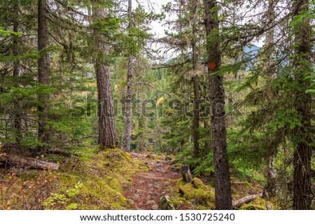 View at Mountain Trail in British Columbia, Canada. Mountains Background. #1530725240