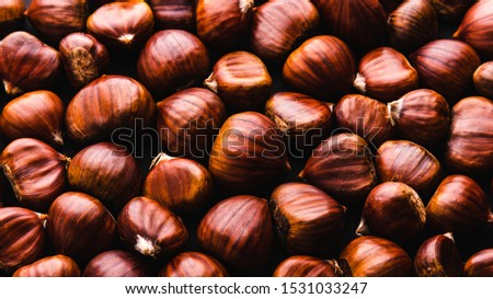 Ripe chestnuts close up. Raw Chestnuts for Christmas. Fresh sweet chestnut. Food background. #1531033247