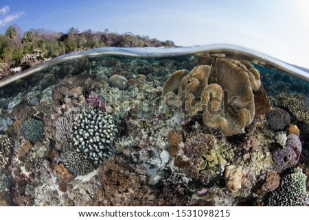 A beautiful coral reef thrives near Alor, Indonesia. This region receives strong currents which bring planktonic food to the vibrant fish and corals that live here. #1531098215