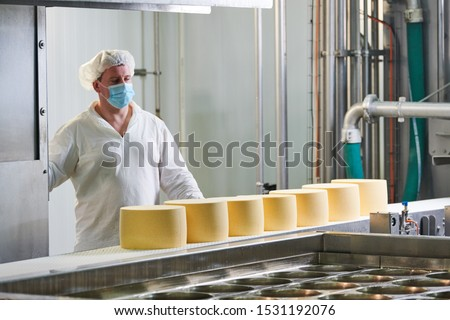 Dairy factory. worker at cheese food production conveyer #1531192076
