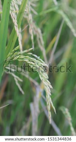Close up Green field farm organic #1531344836