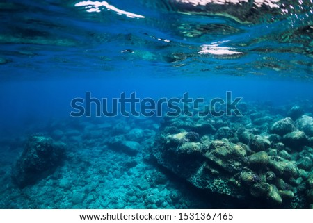 Tranquil underwater scene with copy space. Tropical transparent ocean #1531367465