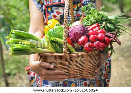 Woman is holding wicker basket with Mixed organic vegetables (red cabbage,radish,coriander, radish,spring onion and sweet peppers) with green farm background.Pesticide free,healthy food,Eco concept. #1531506824