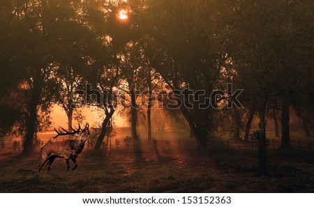 Deer in autumn forest at sunrise