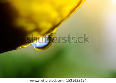 macro photography of lemon plant with a drop of water hanging on it with a natural unfocused background #1531622624