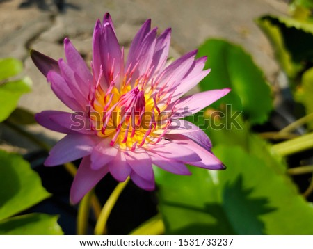 Pink lotus flowers and beautiful Gaysorn. #1531733237