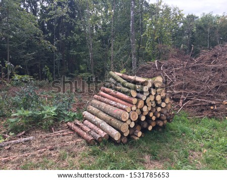 Preparing for winter heating with wood #1531785653