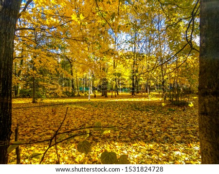 Autumn city park scene. Autumn in city. Autumn city scene. Autumn landscape #1531824728