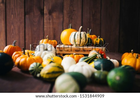 Group of colorful halloween decoration pumpkins at brown background #1531844909