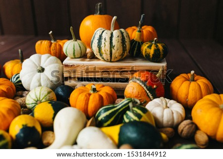 Group of colorful halloween decoration pumpkins at brown background #1531844912