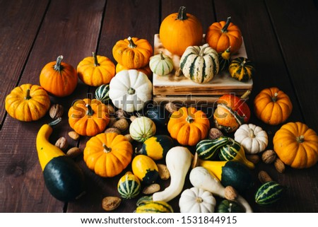 Group of colorful halloween decoration pumpkins at brown background #1531844915