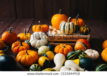 Group of colorful halloween decoration pumpkins at brown background #1531844918