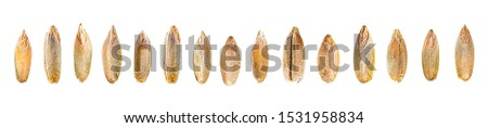Set of rye grains. Rye grains isolated on a white background, top view. Macro.  #1531958834