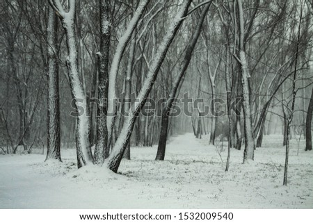 Beautiful winter landscape on a background of trees and forest. Christmas and New Year mood. Snowfall and the view as in a fairy tale #1532009540