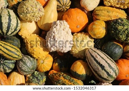 Gourds. Various types, sizes and varieties of Gourds for sale at a Farmers Market. Colorful Gourds for sale.  #1532046317