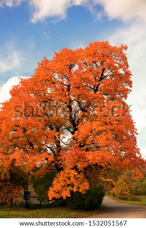 autumn leaf stove leaf symphony #1532051567