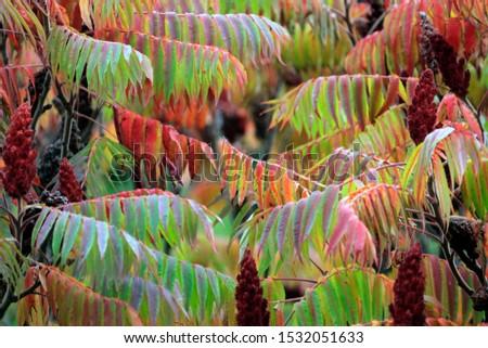 autumn leaf stove leaf symphony #1532051633