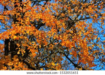 autumn leaf stove leaf symphony #1532051651
