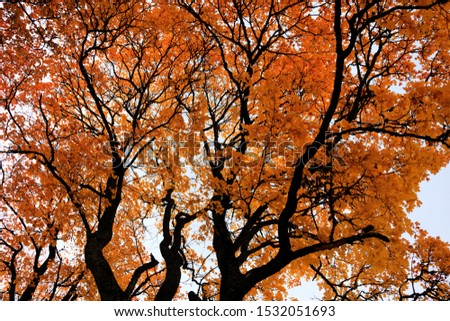 autumn leaf stove leaf symphony #1532051693