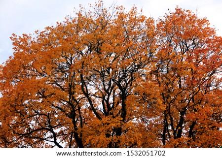 autumn leaf stove leaf symphony #1532051702